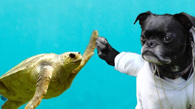 8d-turtle.jpg