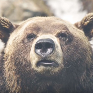 How to Act Around Wildlife: Bears